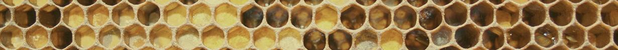 honey_honeycomb_w1_Header